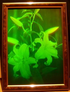 "Hologram ""Lilies"""